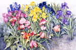 floral paintings-watercolor on paper